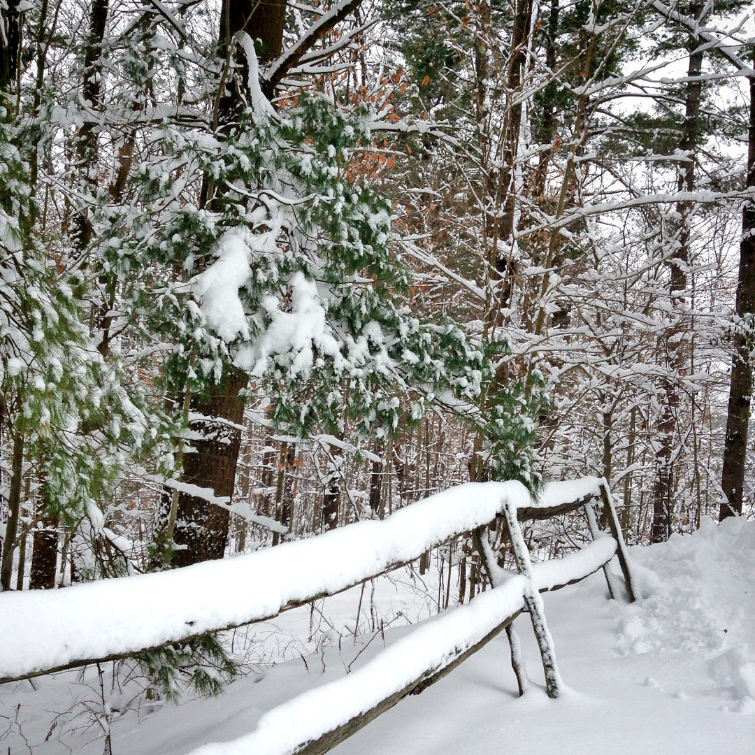 Photo of a snow-covered wooden fence and trees.